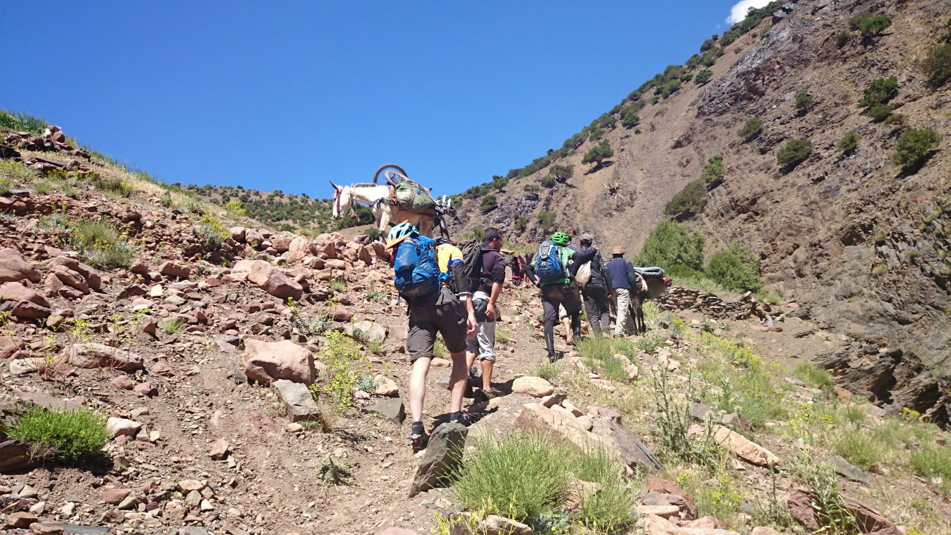 Day 4 - Those  mules sure do carry those bikes better than we could! The climb toward Tizi-n-Rughuelt pass. © Shaun Grey