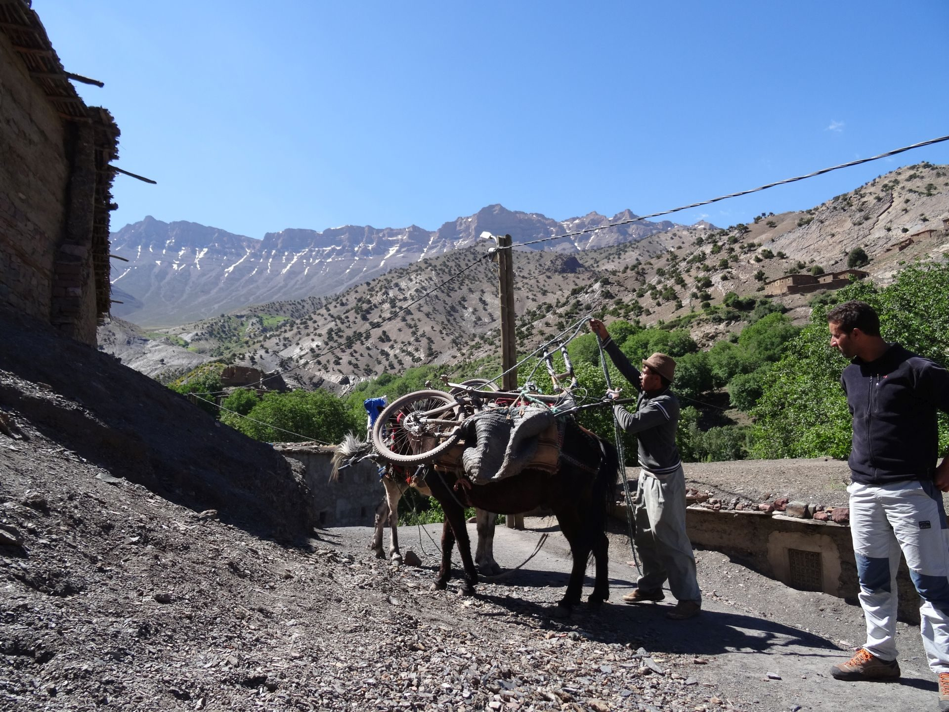 Day 4 - And here they are, the two mules which will help us make the long, steep & rocky climb over Tizi-n-Rughuelt pass. At Ghougoult, with snow in the gullies of the long ridge of Jbel Tarkedit (12,198 ft) in the distance. © Steve Woodward
