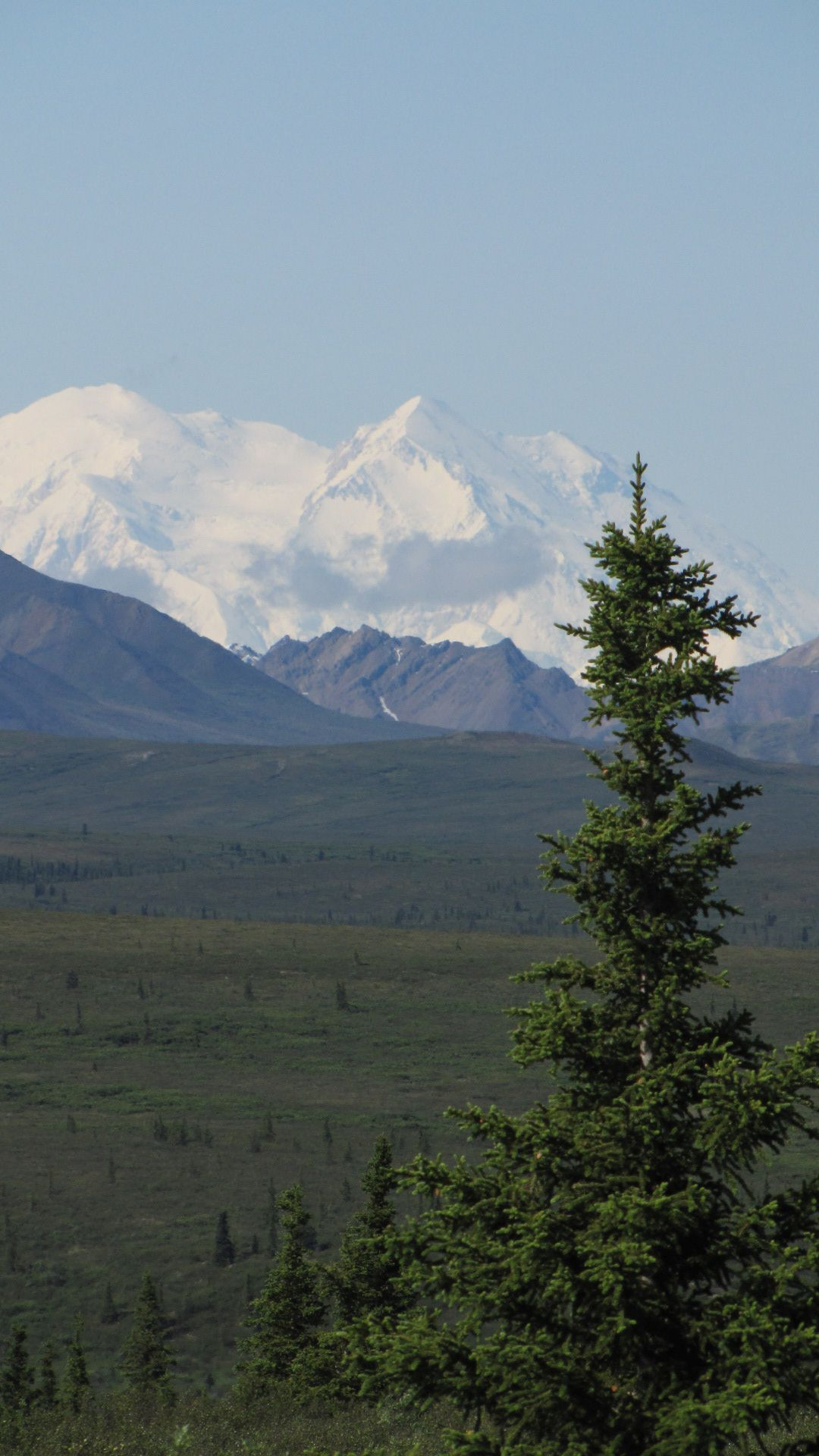 Denali Nat Pk - MOUNT MCKINLEY (aka Denali) SIGHTED! (tallest moontin in N America at ~20,000 feet)