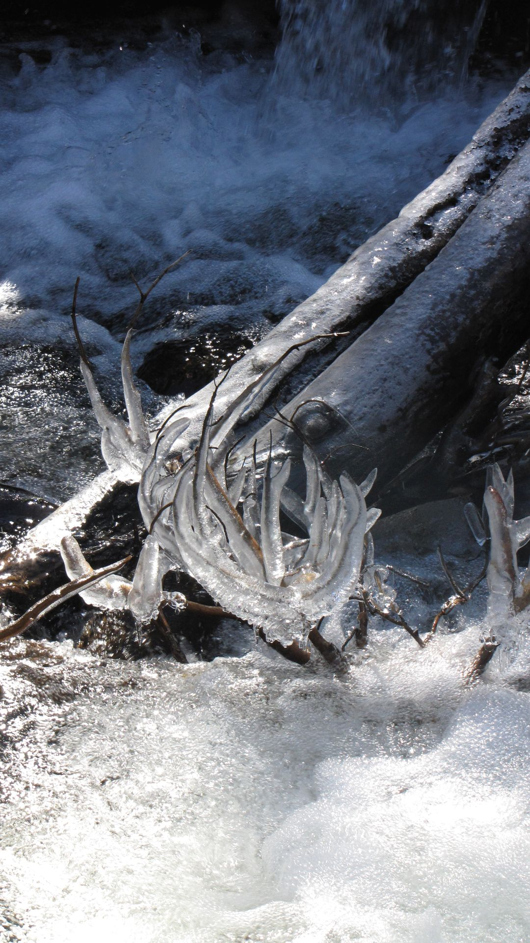 Nr Allenspark, Rocky Mtn Nat Pk, CO, USA - Not frozen antlers