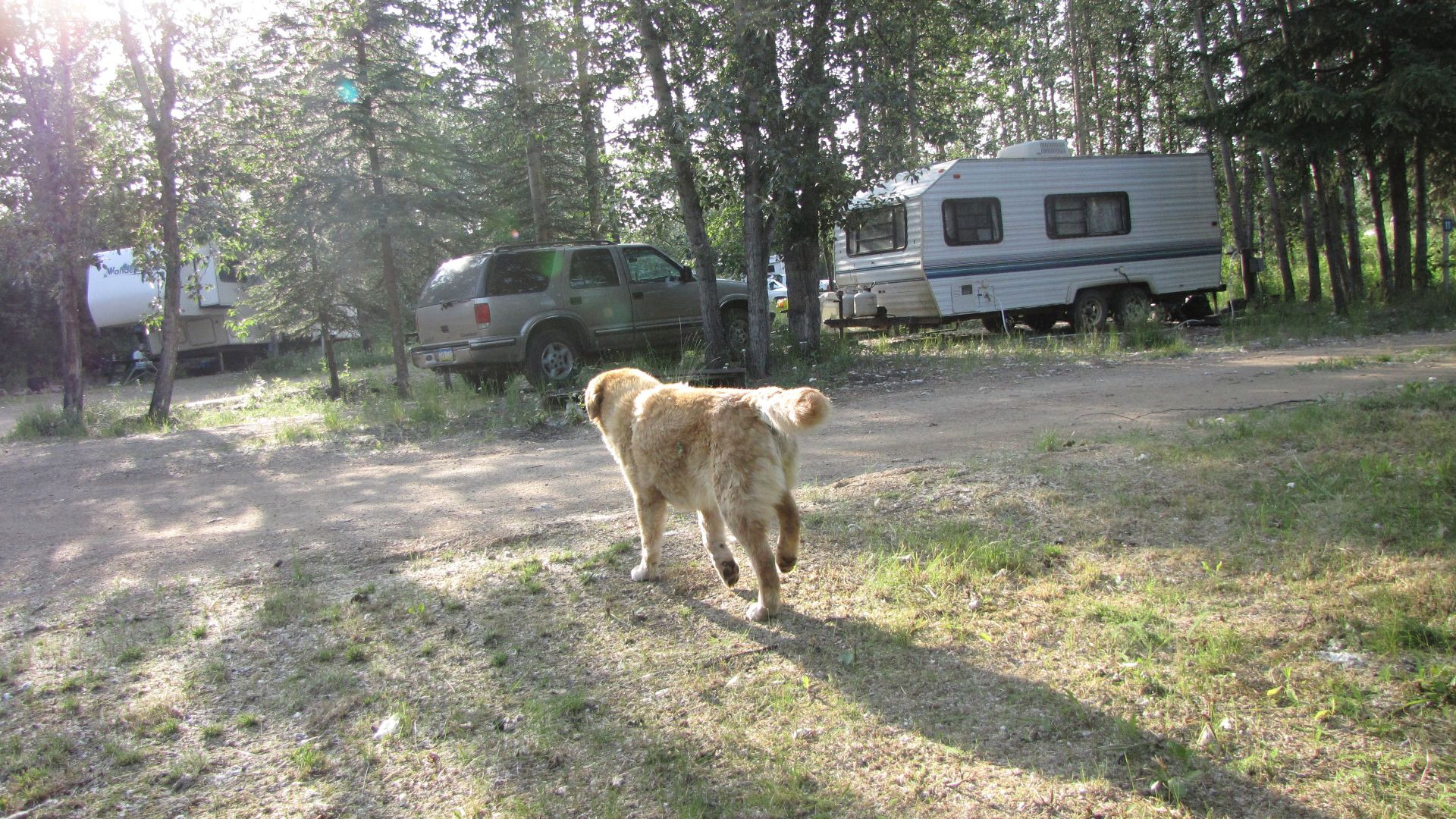 Northway Junction, AK, US - Camera-shy \'Goldie\'