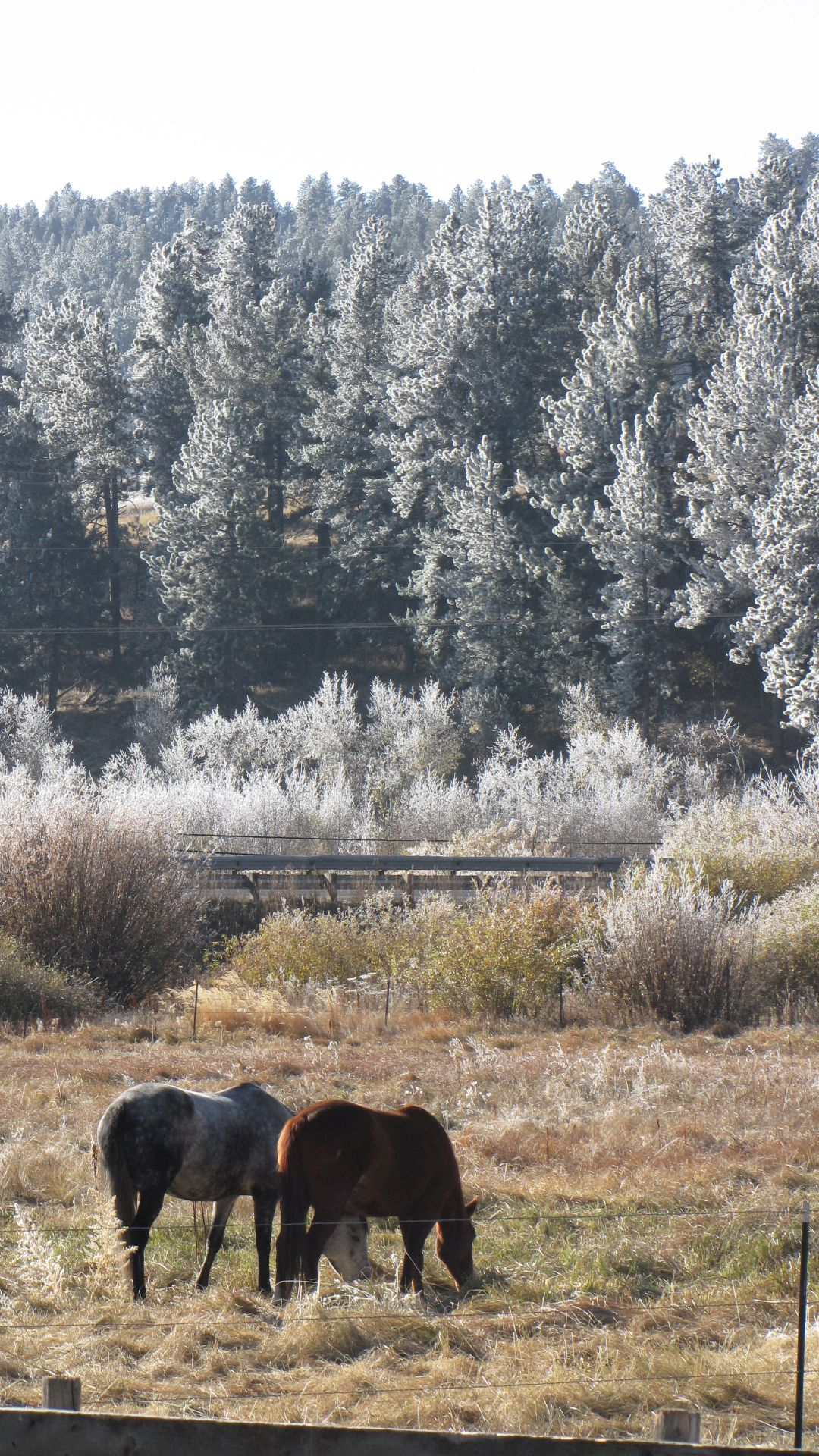 Nr Bailey, CO, USA - hossies brave the cool morning